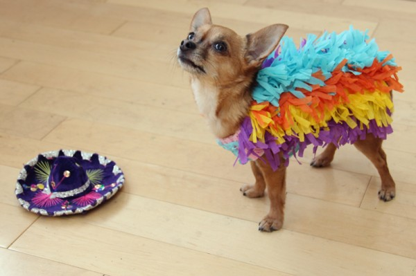 Irresistible Links Sequin T Pinata Dog More