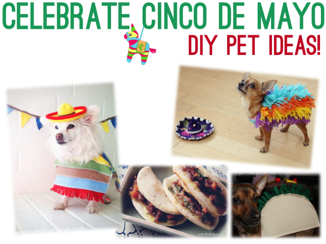 Cinco de Mayo DIY Ideas for Pets