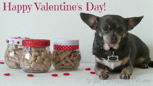 Happy-Valentines-Day-Chuy-Chihuahua-_MilkBoneLove_thumb