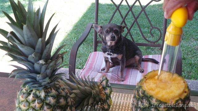 Irresistible Skinny Pina Colada Recipe Chuy Chihuahua - IrresistibleIcing.com