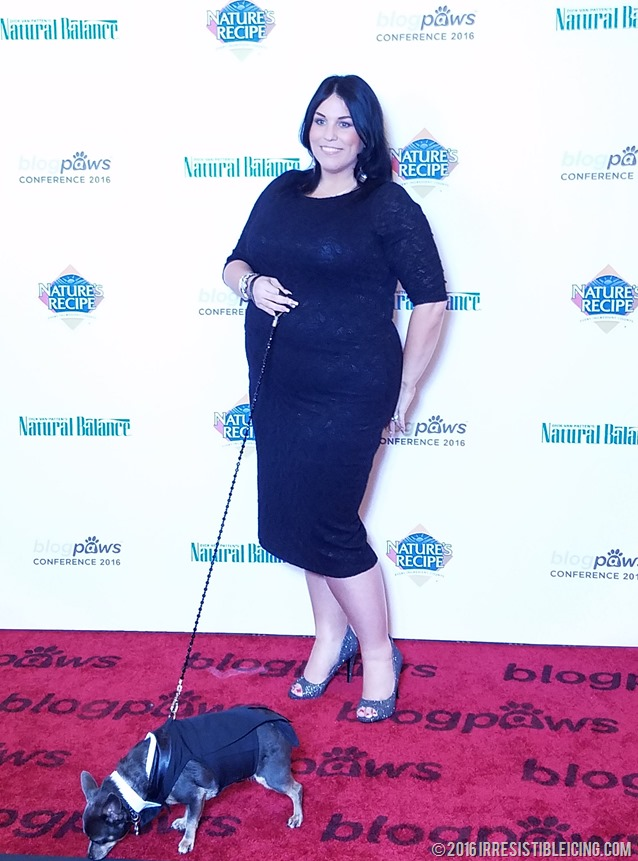 BlogPaws Red Carpet with Chuy Chihuahua