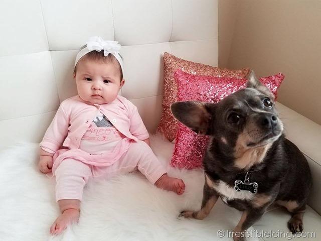 Catalina Rose and Chuy Chihuahua